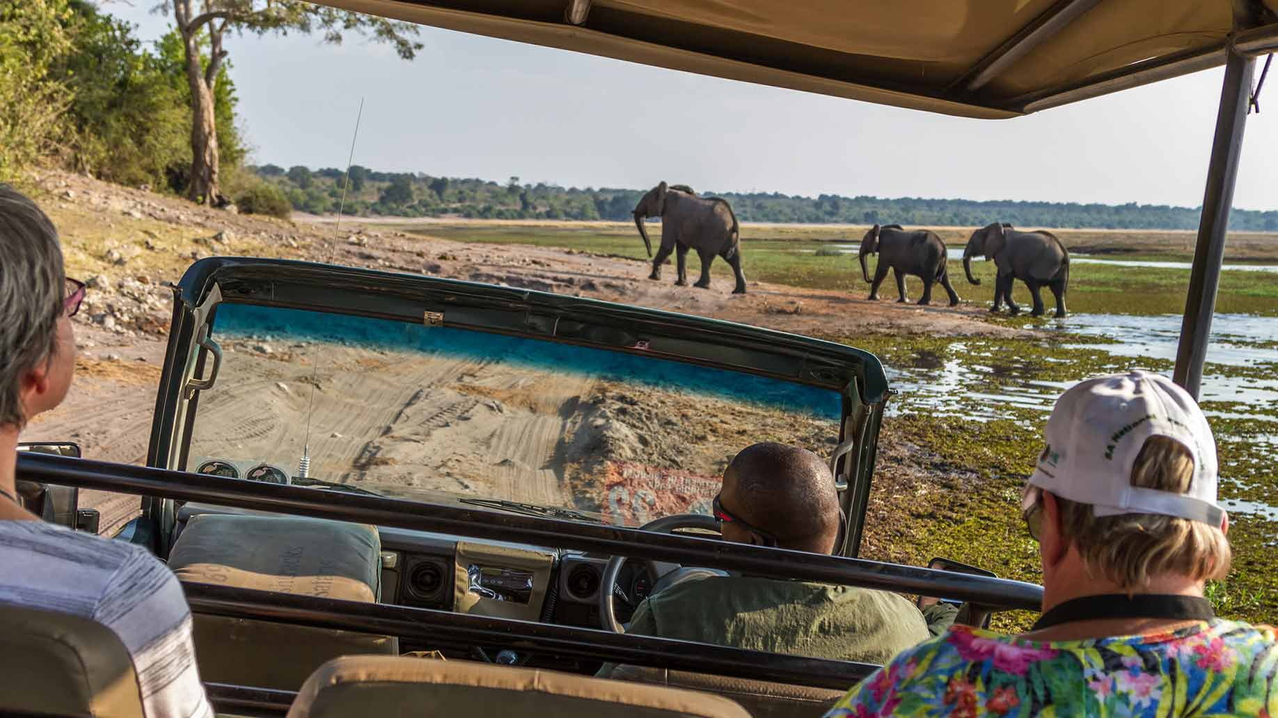 safari africano elefantes